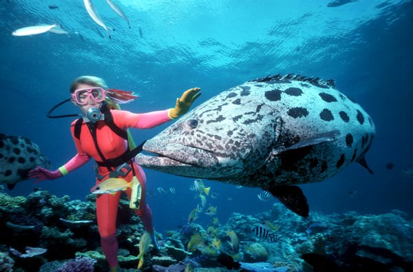 Great-Barrier-Reef-600x400