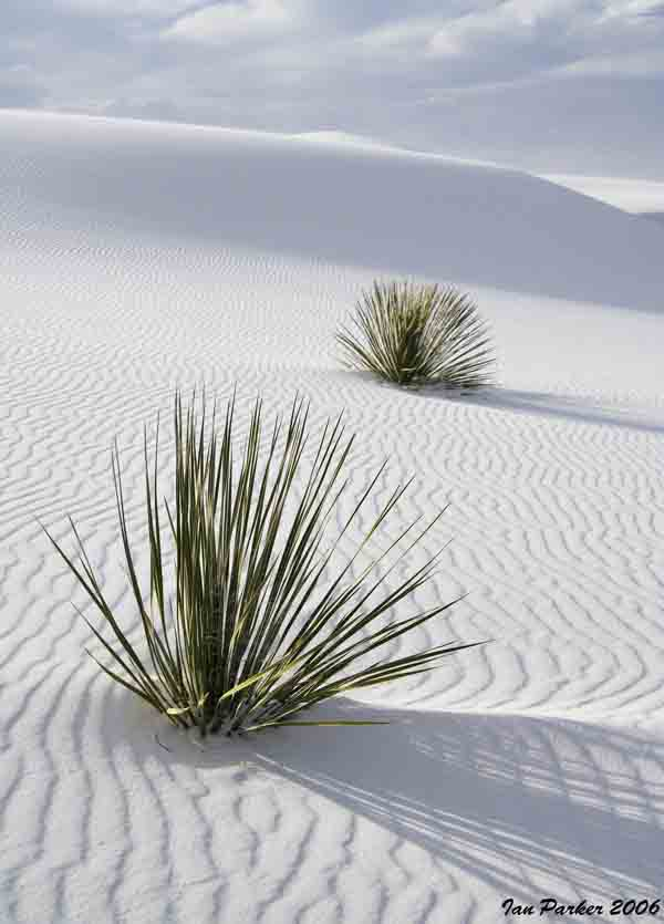 White Sands_Two Yuccas copy2