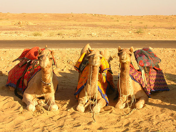 camel-safari-rajastan-india