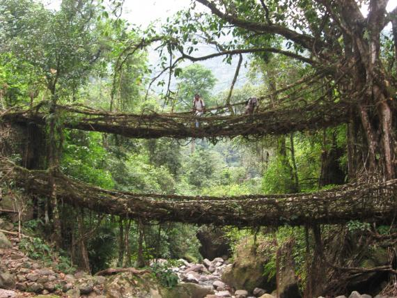 root-bridges-cherrapungee.2239.large_slideshow