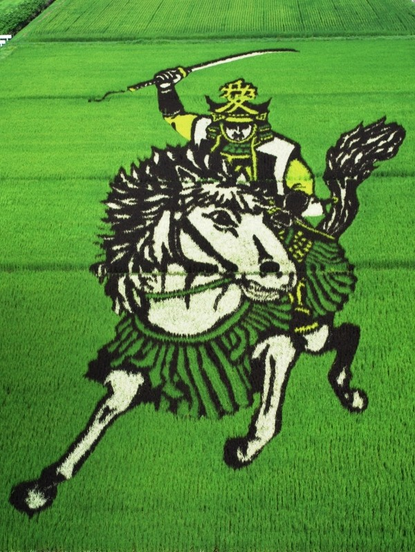 sengoku_busho_of_rice_field_art