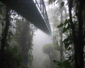 nature bridge (4)